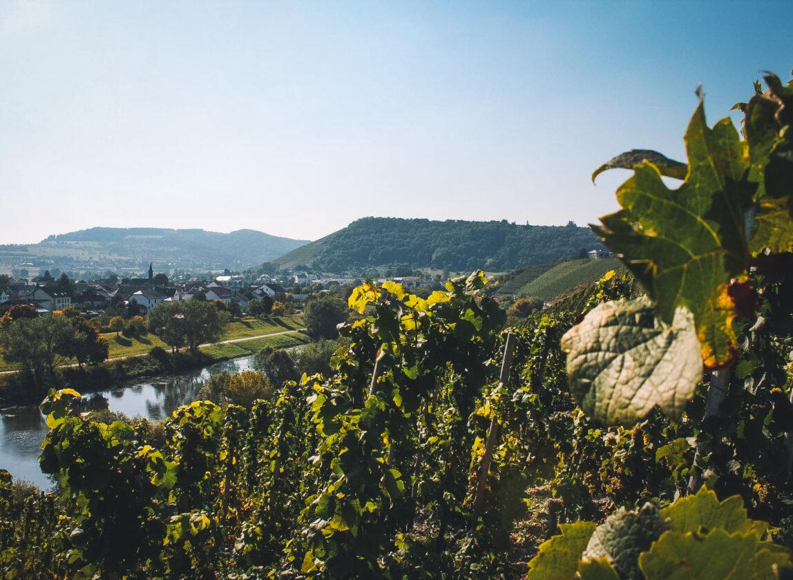 Sekt vineyards in Saar