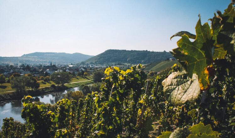 Discover Sekt – German Sparkling Wine